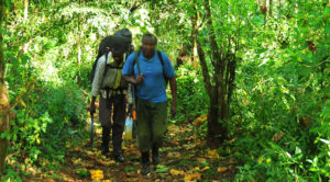 Trekking Mountain Elgon in Eastern Uganda.