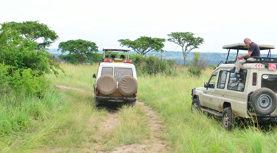 An image showing a wildlife safari in Uganda.